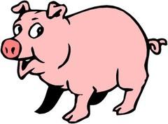 A pigs orgasm lasts 30 minutes.