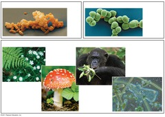 an organisms body structure is used to classify organisms.