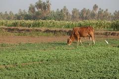 Mixed Crop and Livestock