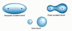 Non-polar molecule
