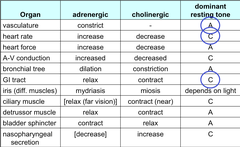 Dominant resting tone of Vasculature, HR, and GI Tract - Adrenergic or Cholinergic?