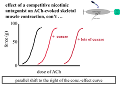 Effect of a Competitive Antagonist on an ACh-Evoked Skeletal Muscle Contraction