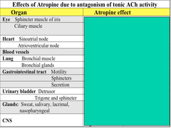 Effects of Atropine due to Antagonism of Tonic ACh Activity (Blank Chart)