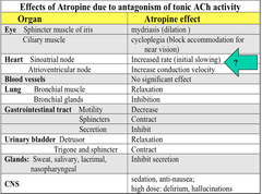 Effects of Atropine due to Antagonism of Tonic ACh Activity (Filled In)