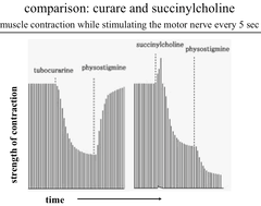 Experiment: Comparison of Curare & Succinylcholine Effects on Strength of Muscle Contraction