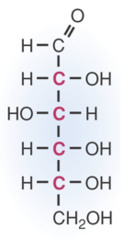 Straight Chain Structure of Glucose