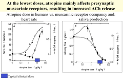 What happens when Atropine is given at very low doses?