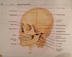 1. Skull Assessment (Objective)