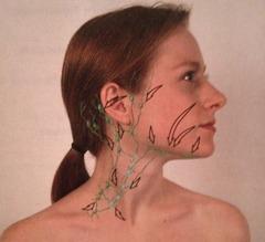 Drainage patterns of lymph nodes
