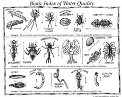 Biotic Index