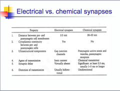 electrical vs chemical synapses