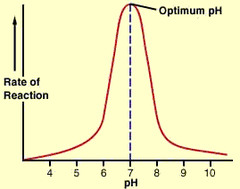 Enzyme Activity pH graph