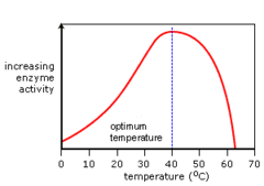 Enzyme Activity Temperature graph