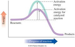 Label a rate of reaction graph